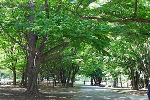 Maruyamapark_2